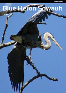 Blue Heron Sqwauk