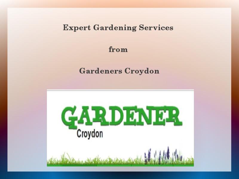 Expert Gardening Services in Croydon 1