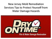 New Jersey Mold Remediation Services: Tips to Protect Yourself from Water Damage Hazards