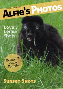 Alfie's Photos