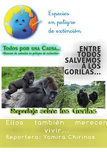 Entre todos Salvemos a los Gorilas