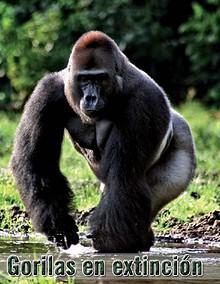 Ariculo sobre Gorila
