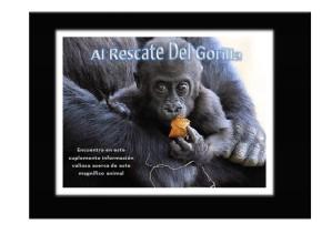 Al Rescate Del Gorila Sep. 2012