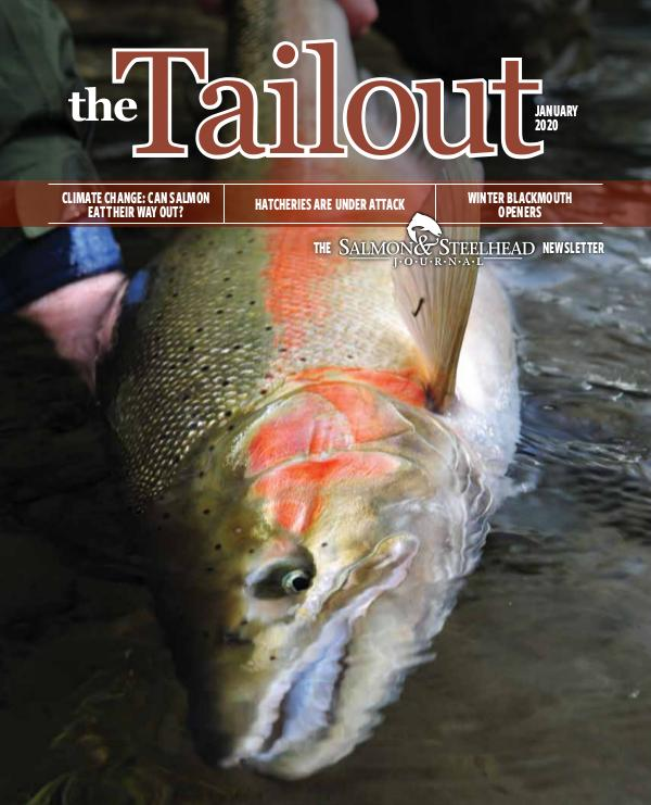 the Tailout January 2020 Tailout_January_2020