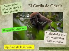 Salvemos el Gorila de Odzala