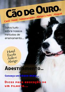 Cão de Ouro - Adestramento para cães - Hotel para Cães