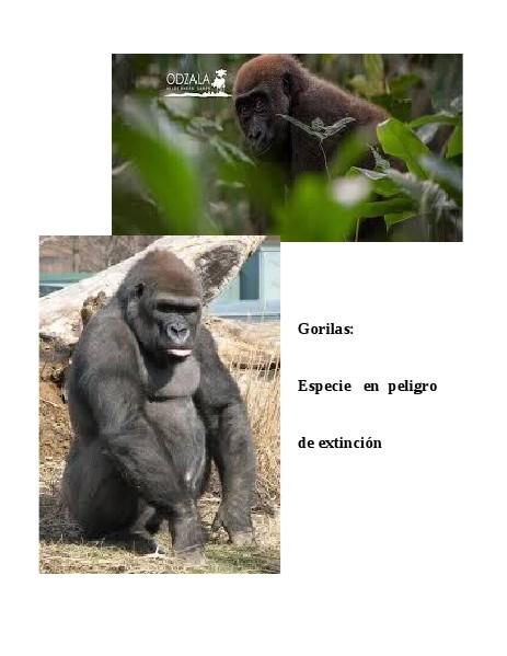 Gorilas: especie en peligro de extinción Agosto 2014