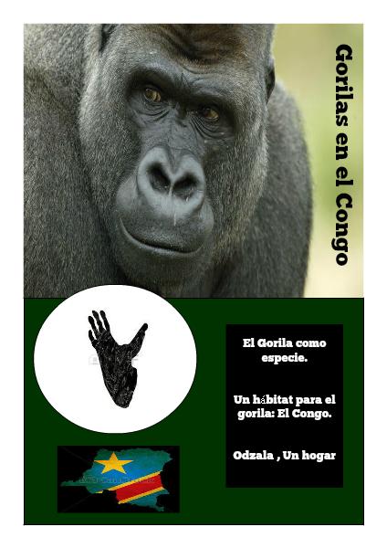 Gorilas en el Congo agosto 2014