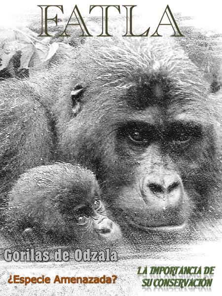 Gorilas de Odzala gorilaz de odzala