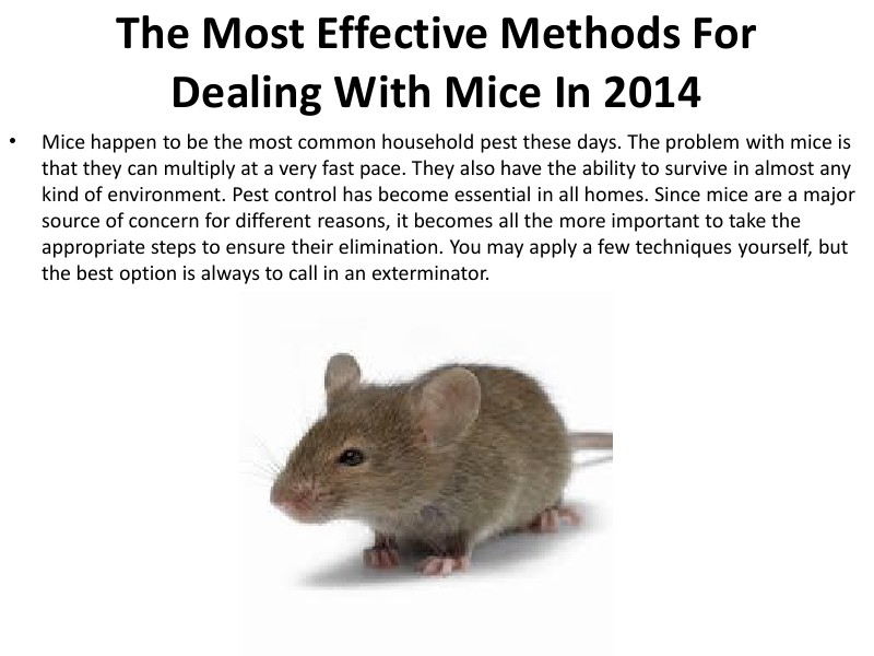 The Most Effective Methods For Dealing With Mice In 2014 ods For Dealing With Mice I