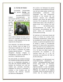 Mundo Animal... Salvemos al Gorila de Odzala...