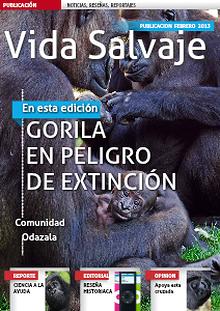 Gorila una especie en peligro