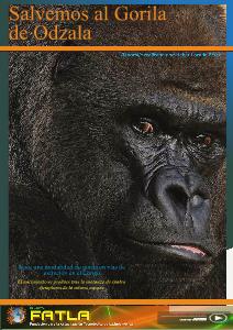 El Gorila de Odzala 001 2013