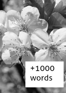 +1000 Words May 2013