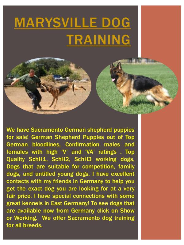 Marysville German Shepherd Breeder Marysville German Shepherd Breeder