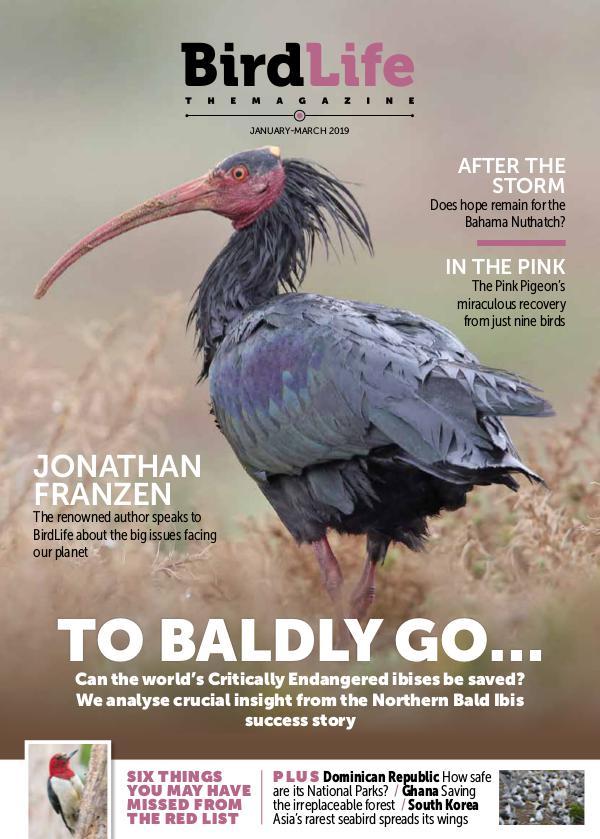 BirdLife: The Magazine Jan - March 2019