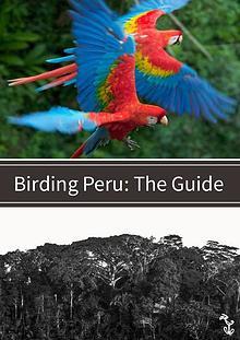 Peru Birding Guide