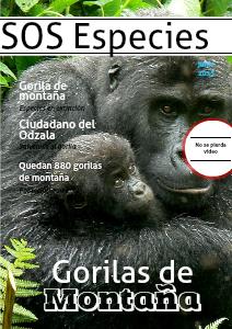 El gorila: una especie a punto de extinguirse Junio 2013