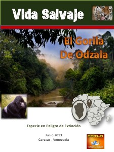 El Gorila de Odzala Jun 2013