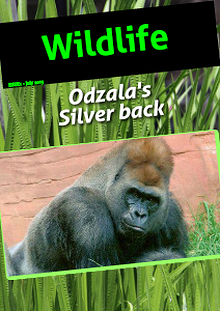 The Gorilla's of Odzala